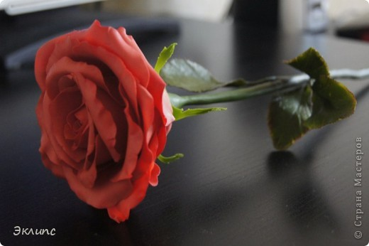 Коралловая роза фото 4