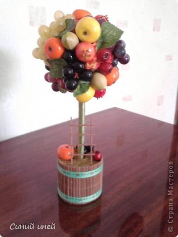 Это мое первое фруктовое дерево - апельсиновое. фото 3