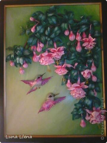Фуксии и колибри фото 1
