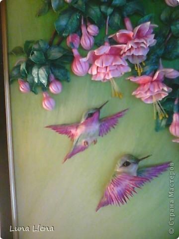 Фуксии и колибри фото 3