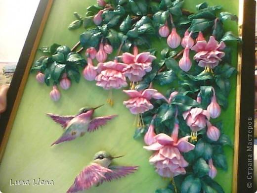 Фуксии и колибри фото 4