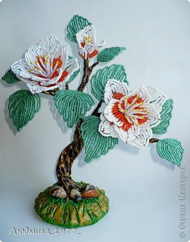Это маленькое дерево зацвело необыкновенно большими цветами!!! фото 1