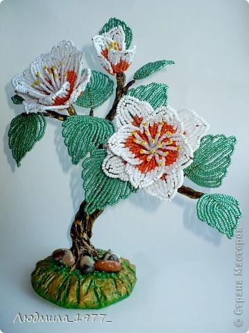 Это маленькое дерево зацвело необыкновенно большими цветами!!! фото 2