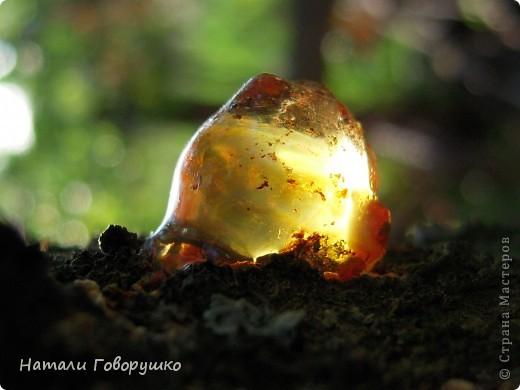 """Всегда нравился янтарь. Красивые легенды связанные с этим камнем... Смола древних деревьев... И однажды меня осенило - так вот же он янтарь! Живой! Еще не упрятанный на сотни столетий под землю! Так началось мое новое увлечение - съемка в макро капель смолы на деревьях. Оказалось - завораживающее зрелище! """"Кусок промытый янтаря, Прозрачный, как заря, Вчерашний выбросил прибой В подарок нам с тобой. Прозрачный, как цветочный мед, Он весь сквозит на свет. Он к нам дошел, к другим дойдет Сквозь сотни тысяч лет. Он выплыл к нам с морского дна, Где тоже жизнь цвела, А в глубине его видна Застывшая пчела. И я сквозь тысячи годов За ней готов в полет: Узнать - с каких она цветов Свой собирала мед. Я жизнь люблю. Она рассказ Развертывает свой. и как мы счастливы сейчас, Лишь знаем мы с тобой. Теперь уже не наугад, Наш опыт разберет - И что такое в жизни яд И что такое мед. Любовь. Ее не взять годам И силой не сломать. Я сам, я сам ее раздам, Чтобы опять, опять Она на радость молодым В прожилках янтаря Сквозь сотни лет пришла к другим, Живым огнем горя.""""                          М. Дудин фото 18"""