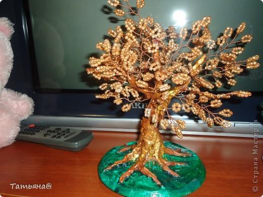 золотое дерево фото 2