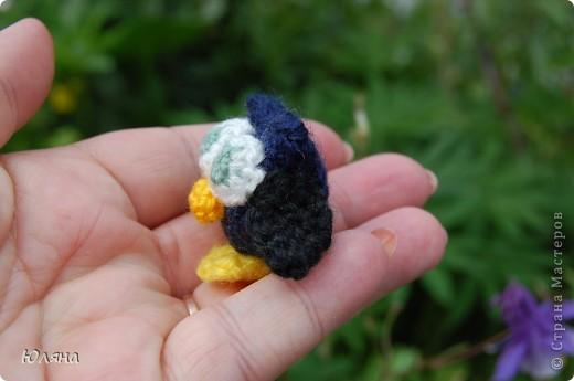 маленькая совушка фото 3