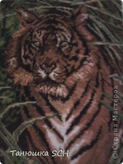 тигр в джунглях фото 1