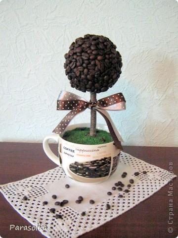 Топиарий. Кофейное дерево.