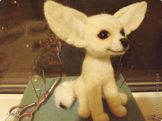 Белая лисичка -Фенёк фото 1