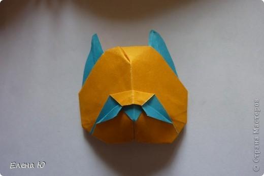 Котенок Гвинта (Джунта) фото 5