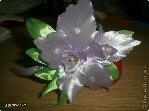 Новый цветочек фото 2