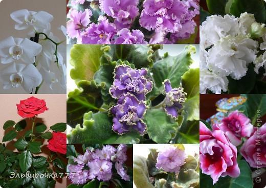 Хочу поделиться красотой и нежностью моих цветущих домочадцев! Все фиалки сортовые, выращенные из листиков фото 1
