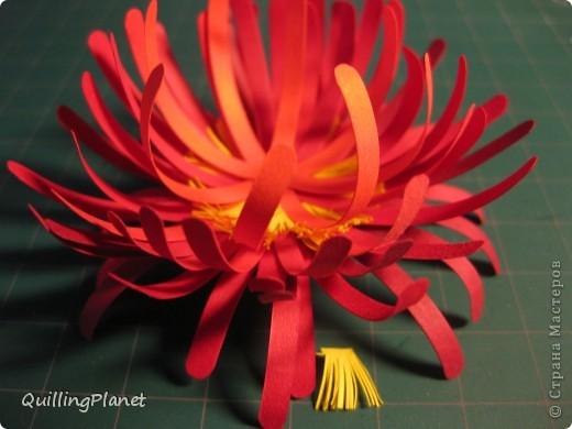 """Продолжение мини-серии красных цветов, вот <a target=""""_blank"""" href=""""/node/384093"""">здесь были маргаритки</a>. Сегодня - хризантема. Делать несложно и интересно собирать цветок. Чем больше схожих оттенков полос для цветка взять - тем интереснее эффект. На внутреннюю часть лучше взять взять оттенки посветлее, чтобы получить эффект подсветки изнутри. Вот и все хитрости. Остальные мелочи - по ходу фотографий. фото 4"""