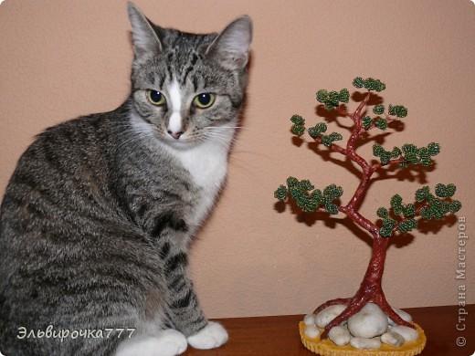 Очень нравятся японские бонсаи,вот вырастила для себя бисерное дерево! Камушки были привезены из Крыма, как память об отличном отдыхе! фото 2