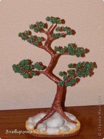 Очень нравятся японские бонсаи,вот вырастила для себя бисерное дерево! Камушки были привезены из Крыма, как память об отличном отдыхе! фото 1