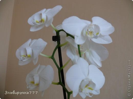 Хочу поделиться красотой и нежностью моих цветущих домочадцев! Все фиалки сортовые, выращенные из листиков фото 9