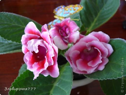 Хочу поделиться красотой и нежностью моих цветущих домочадцев! Все фиалки сортовые, выращенные из листиков фото 11