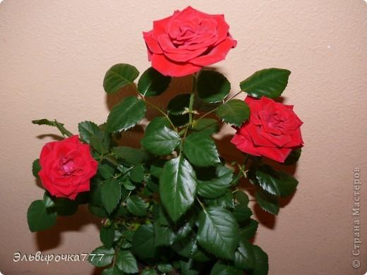 Хочу поделиться красотой и нежностью моих цветущих домочадцев! Все фиалки сортовые, выращенные из листиков фото 12