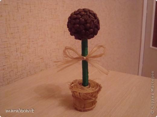 Кофейное дерево. фото 2