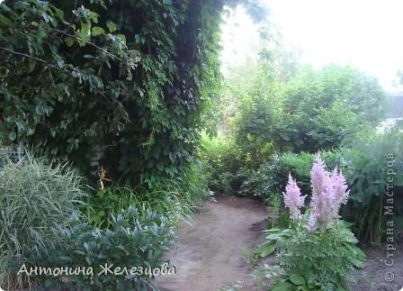 Приглашаю в мой сад. Самый разгар лета, а я начинаю репортаж с весенних цветов. Представляю несколько сортов нарциссов. фото 59