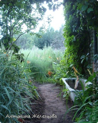Приглашаю в мой сад. Самый разгар лета, а я начинаю репортаж с весенних цветов. Представляю несколько сортов нарциссов. фото 60