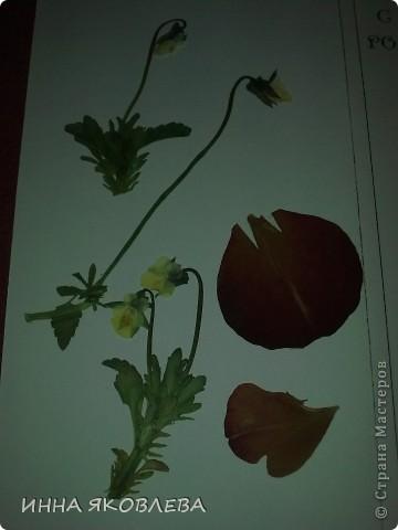 Вот такие необычные, парящие в воздухе, прозрачные композиции из цветов и листиков. С лёгкой руки Марины , назвала это направление в плоскостной флористике  ---  ЛАМИ-АРТ фото 15