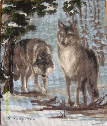 Картину вышила по просьбе младшего сына. Он очень любит волков