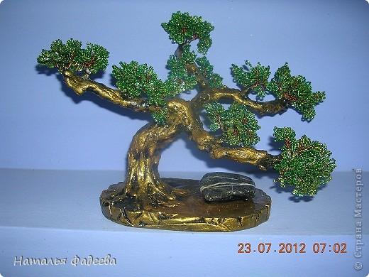 Золотой Бонсай. фото 1