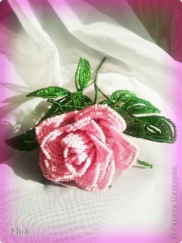 В розовом цвете фото 2