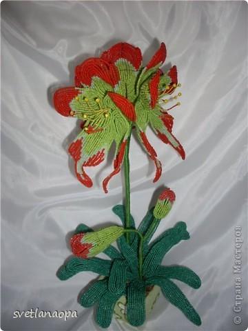 """А этот цветок сплетен в прошлом году  на """"Радуге рукоделий""""под руководством прекрасного куратора Олечки Очеретной. фото 1"""