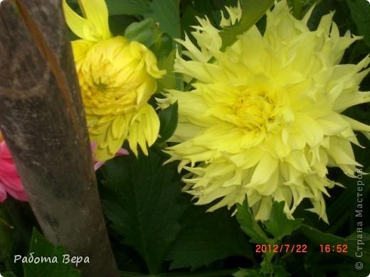 Лето, ах, лето! фото 10