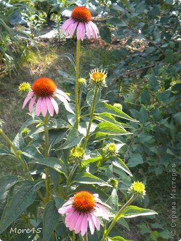 Вот такой пучеглазик получился, теперь живет в саду. фото 12
