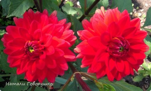 """Об этих прекрасных цветах было сложено множество историй, мифов и легенд. Издавна люди поклонялись лилии как одному из самых прекрасных созданий на земле. Даже пожелание благополучия звучало так: """"Пусть твой путь будет усыпан розами и лилиями"""". Символ надежды в Древней Греции, мира и непорочности на Руси, а во Франции эти цветы обозначали - милосердие, сострадание и правосудие. фото 6"""