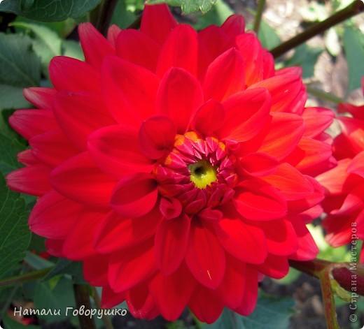 """Об этих прекрасных цветах было сложено множество историй, мифов и легенд. Издавна люди поклонялись лилии как одному из самых прекрасных созданий на земле. Даже пожелание благополучия звучало так: """"Пусть твой путь будет усыпан розами и лилиями"""". Символ надежды в Древней Греции, мира и непорочности на Руси, а во Франции эти цветы обозначали - милосердие, сострадание и правосудие. фото 7"""
