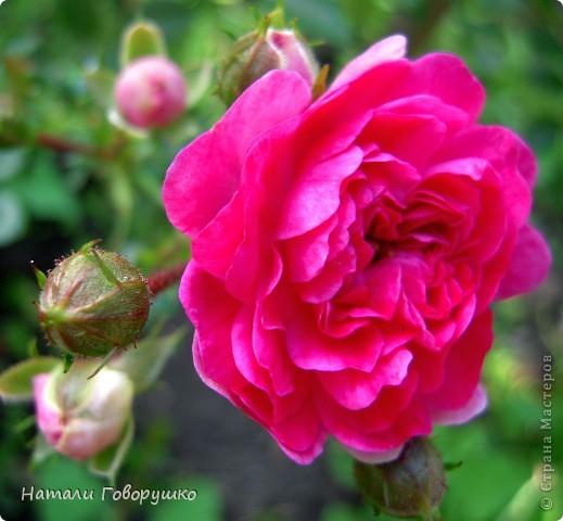 """Об этих прекрасных цветах было сложено множество историй, мифов и легенд. Издавна люди поклонялись лилии как одному из самых прекрасных созданий на земле. Даже пожелание благополучия звучало так: """"Пусть твой путь будет усыпан розами и лилиями"""". Символ надежды в Древней Греции, мира и непорочности на Руси, а во Франции эти цветы обозначали - милосердие, сострадание и правосудие. фото 9"""