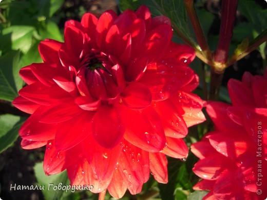 """Об этих прекрасных цветах было сложено множество историй, мифов и легенд. Издавна люди поклонялись лилии как одному из самых прекрасных созданий на земле. Даже пожелание благополучия звучало так: """"Пусть твой путь будет усыпан розами и лилиями"""". Символ надежды в Древней Греции, мира и непорочности на Руси, а во Франции эти цветы обозначали - милосердие, сострадание и правосудие. фото 17"""
