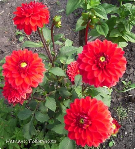 """Об этих прекрасных цветах было сложено множество историй, мифов и легенд. Издавна люди поклонялись лилии как одному из самых прекрасных созданий на земле. Даже пожелание благополучия звучало так: """"Пусть твой путь будет усыпан розами и лилиями"""". Символ надежды в Древней Греции, мира и непорочности на Руси, а во Франции эти цветы обозначали - милосердие, сострадание и правосудие. фото 28"""