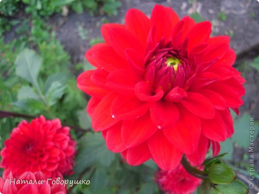 """Об этих прекрасных цветах было сложено множество историй, мифов и легенд. Издавна люди поклонялись лилии как одному из самых прекрасных созданий на земле. Даже пожелание благополучия звучало так: """"Пусть твой путь будет усыпан розами и лилиями"""". Символ надежды в Древней Греции, мира и непорочности на Руси, а во Франции эти цветы обозначали - милосердие, сострадание и правосудие. фото 32"""