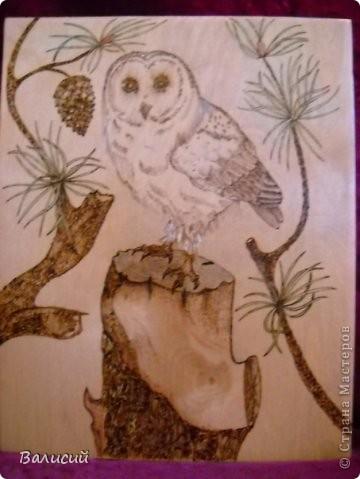 Сама сова из книги  о пирографии, Нормы Грегори, продолжение пня и ветки, с  сосновой шишкой, от руки, хвоя чуть подкрашена.