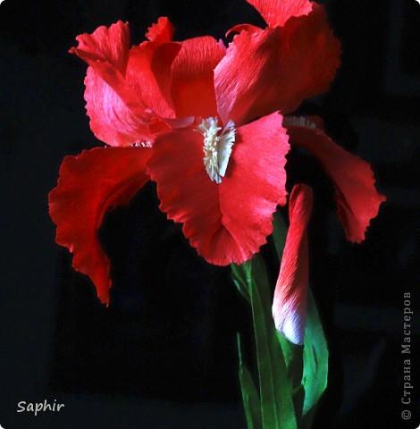"""За богатую окраску цветков назван в честь богини радуги - Ириды. По многообразию оттенков, изысканностью окраски и строения цветок ириса сравним с орхидеей, поэтому его называют """"орхидея сада"""". фото 7"""