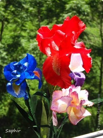 """За богатую окраску цветков назван в честь богини радуги - Ириды. По многообразию оттенков, изысканностью окраски и строения цветок ириса сравним с орхидеей, поэтому его называют """"орхидея сада"""". фото 14"""