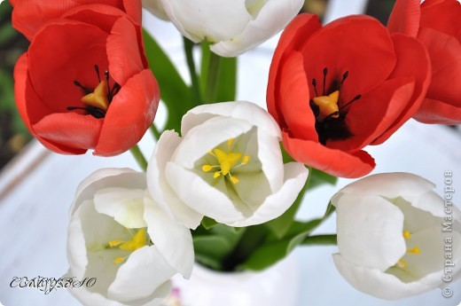 Люблю лепить цветы, которые так недолговечны - особенно тюльпаны. Они ,кстати, обладают одним замечательным свойством - благодаря контрасту белого и красного они снимают усталость))))))))))))))))) вот, получились волшебные тюльпашки))))))))))) фото 1