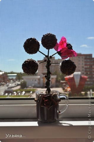 Кофейный топиарий фото 1