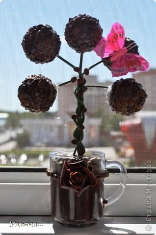 Кофейный топиарий фото 2