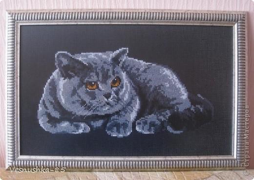 Согласитесь, очень красивый кот ))))
