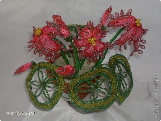 1453 просмотров. цветы. цикламен. плетение французское. жабеня S. Альбом пользователя жабеня S. зелёный.