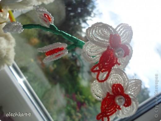 моя орхидея фото 4