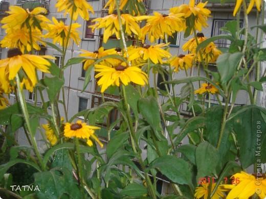 цветочный балкон фото 1