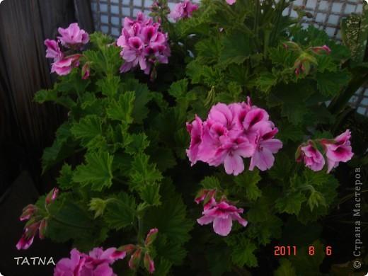 цветочный балкон фото 2
