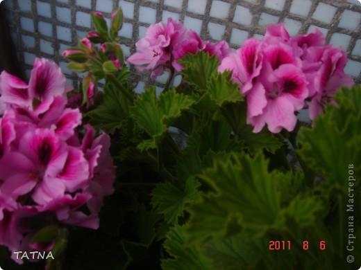 цветочный балкон фото 3